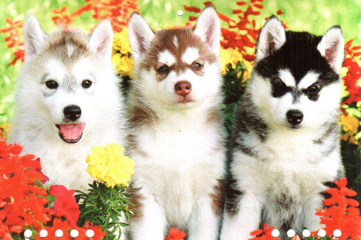 """Календарь малый """"Три  щенка"""""""