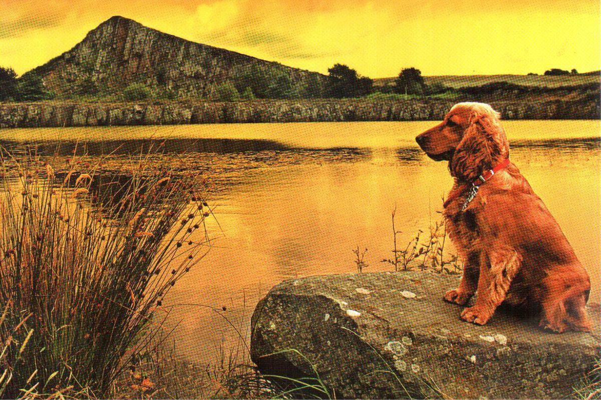 """Календарь малый """"Собака на камне"""""""