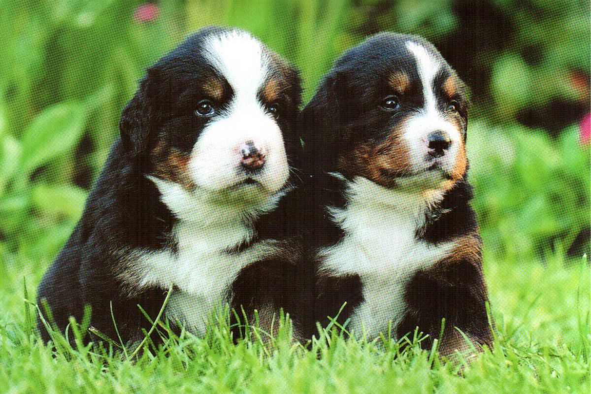 "Календарь малый ""Два щенка на траве"""