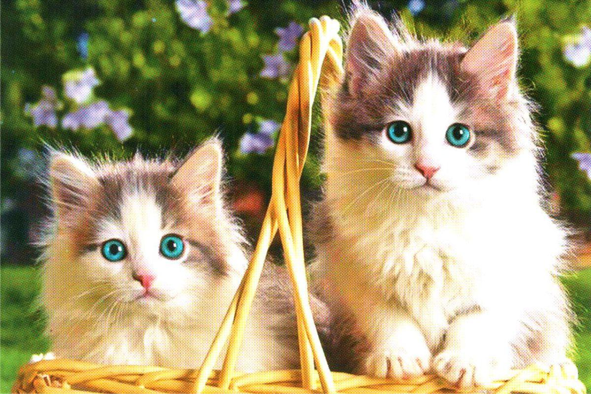 """Календарь малый """"Два котенка в корзине"""""""