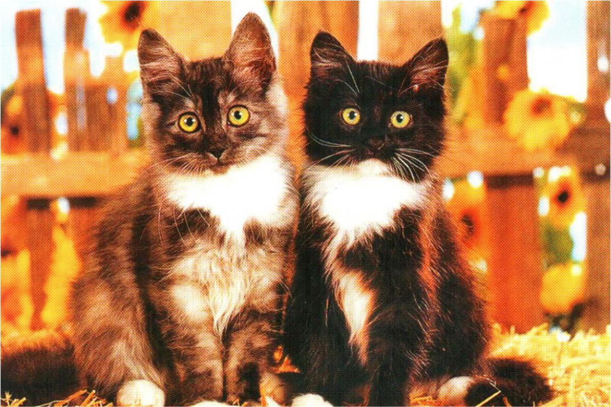 """Календарь малый """"Два котенка у забора"""""""