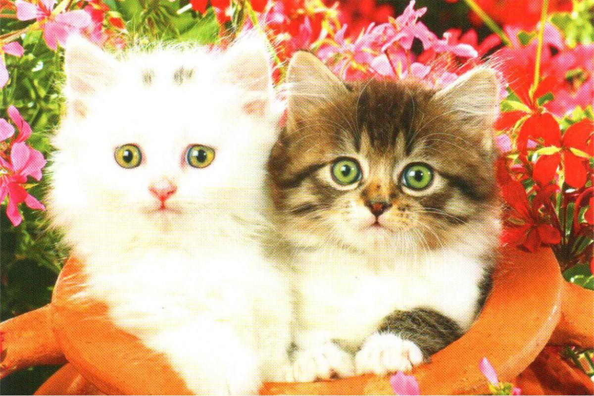 """Календарь малый """"Два котенка в кувшине"""""""