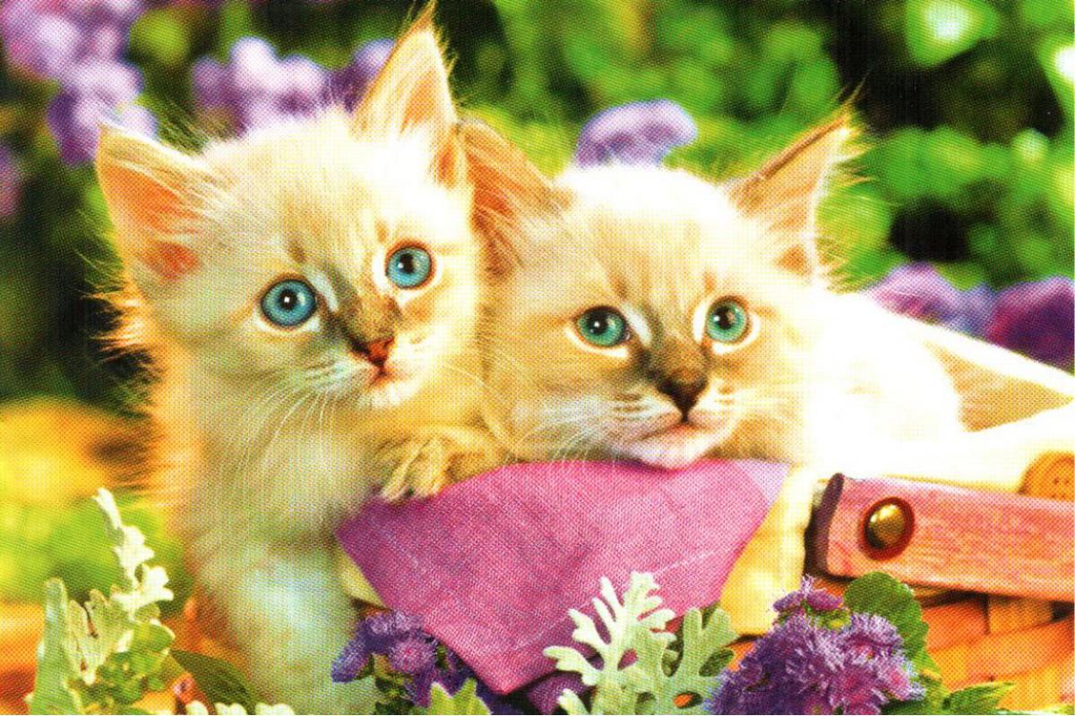 """Календарь малый """"Два белых котенка"""""""