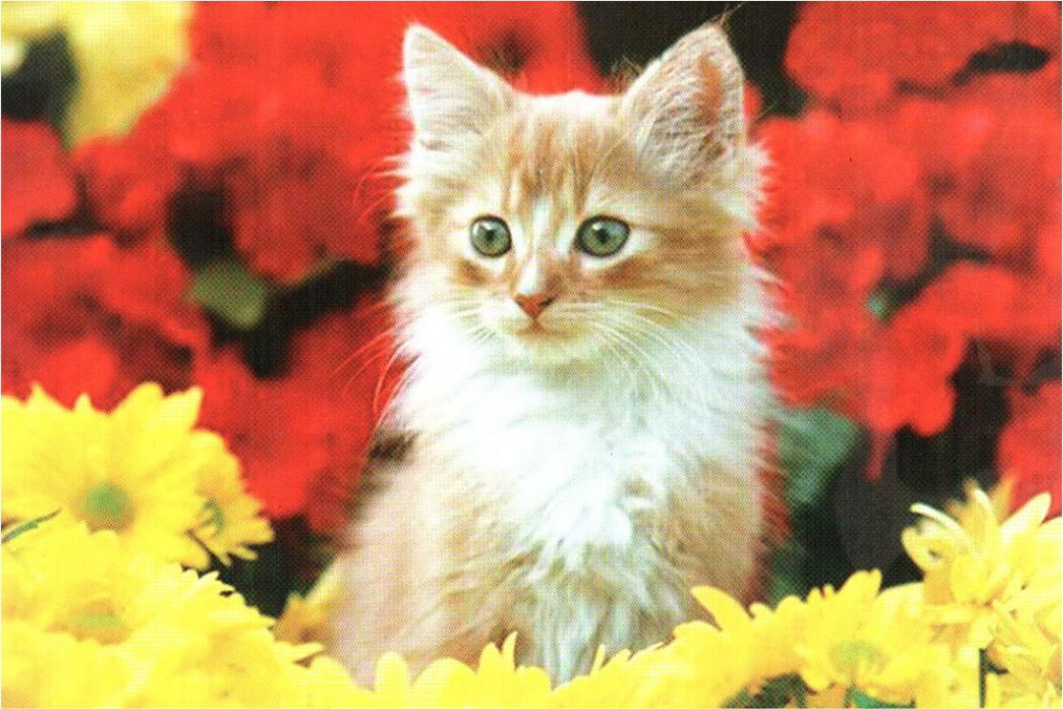 """Календарь малый """"Рыжий котенок в цветах"""""""