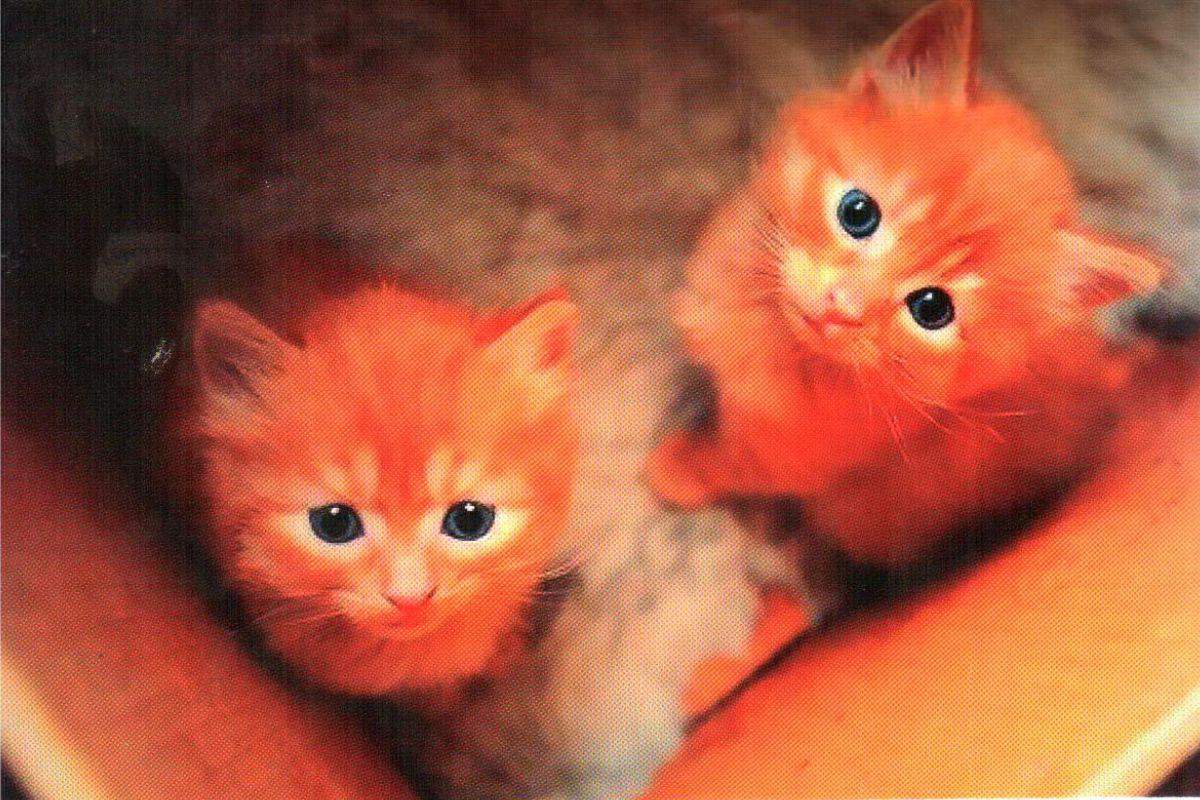 """Календарь малый """"Два рыжих котенка"""""""