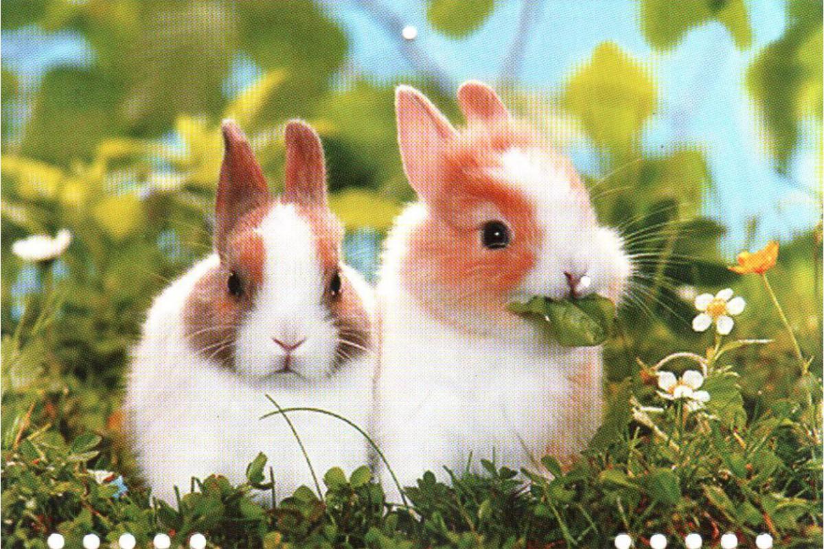"Календарь малый ""Два кролика"""