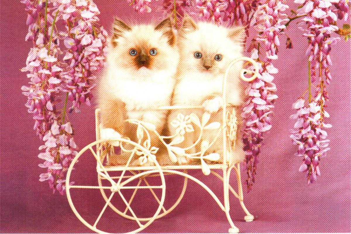 """Календарь малый """"Два котенка на тележке"""""""