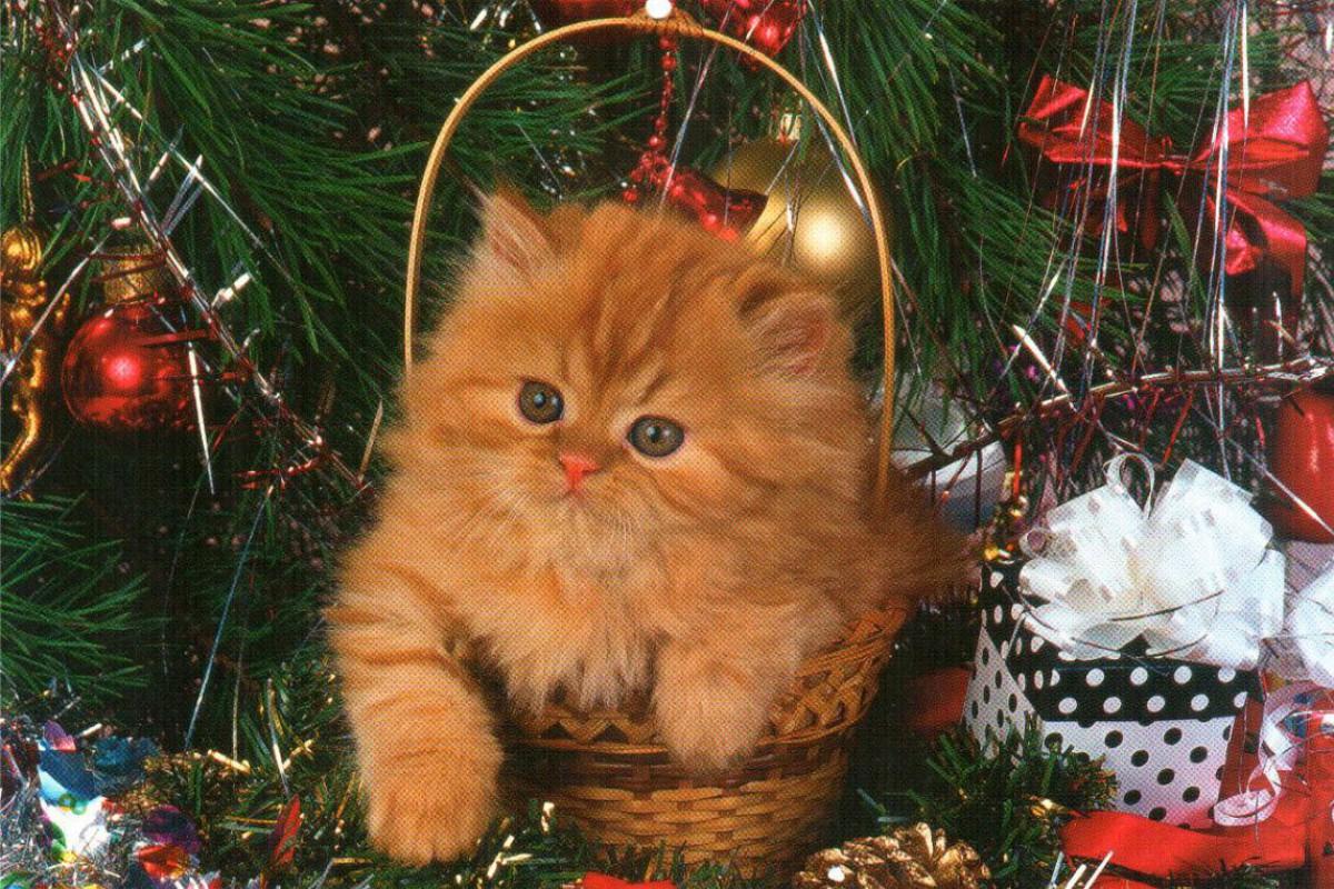 """Календарь малый """"Новогодний котенок в корзине"""""""