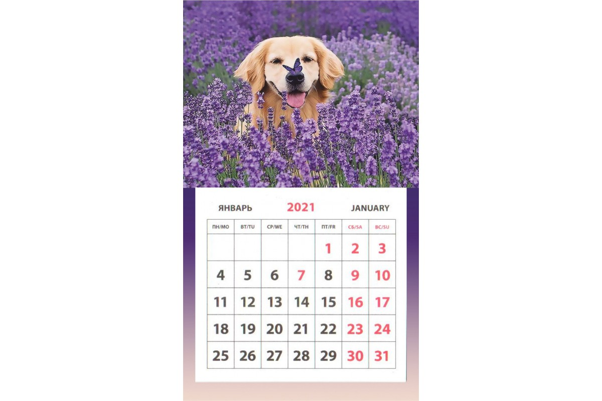 Календарь на магните - Лабрадор с бабочкой