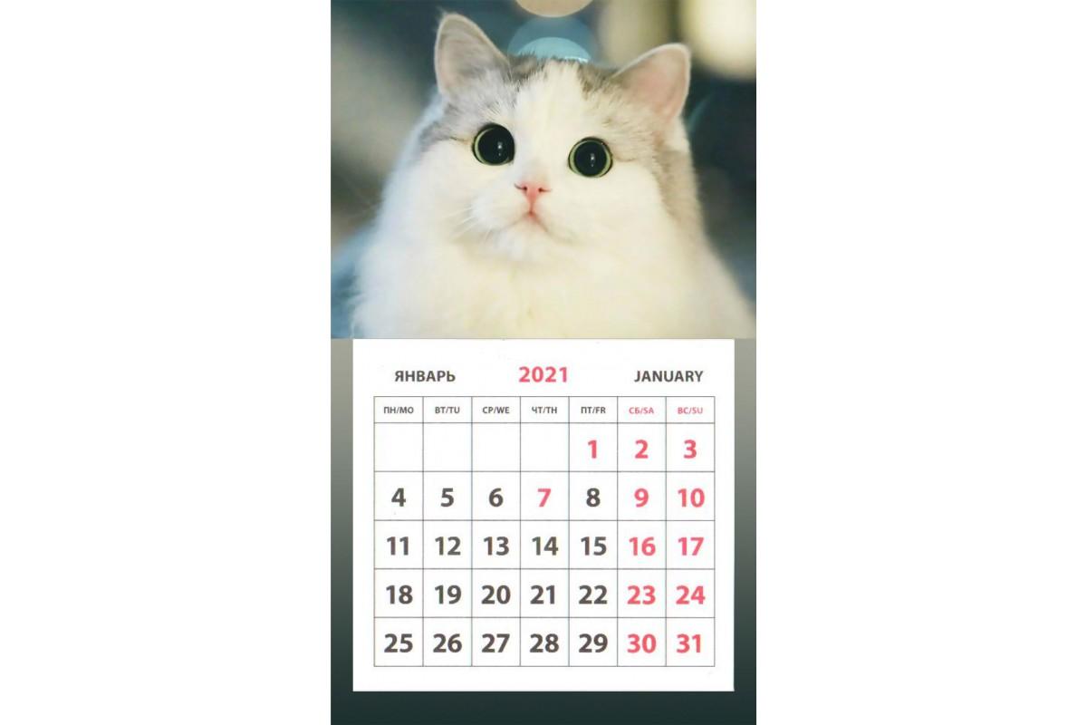 Календарь на магните - Белая кошка