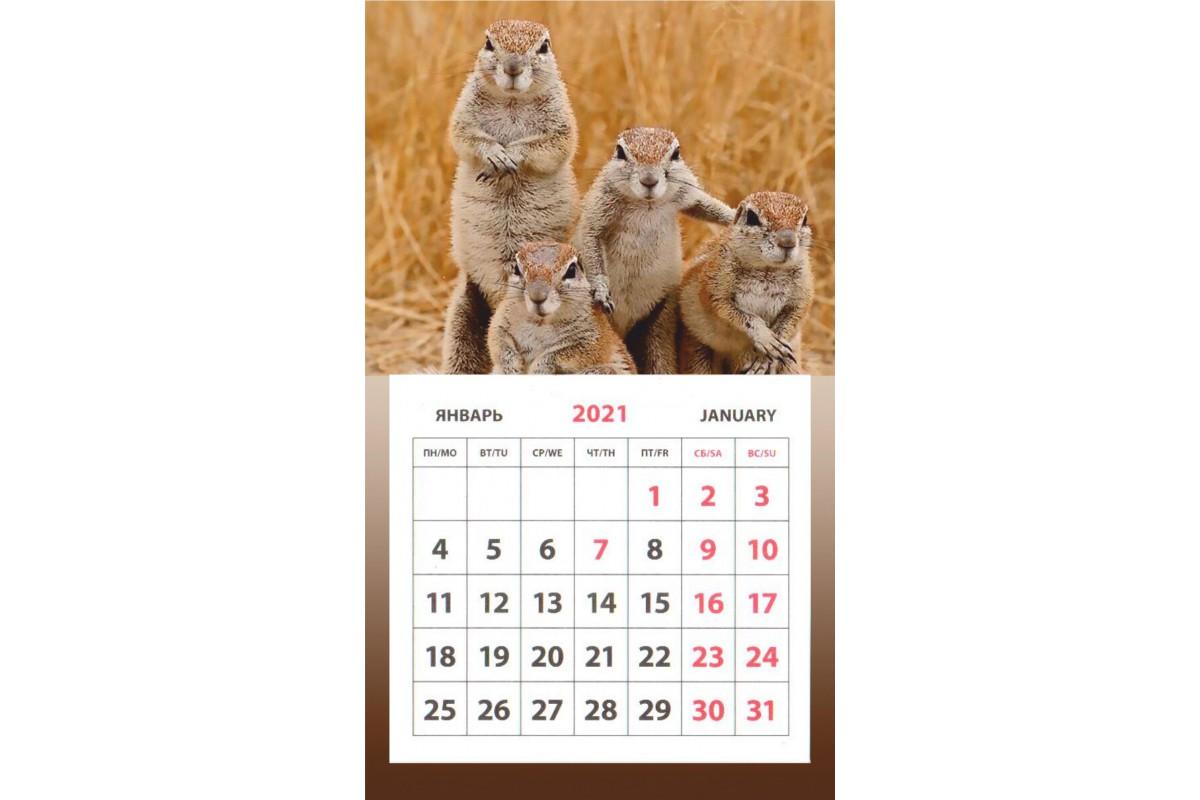 Календарь на магните - Суслики